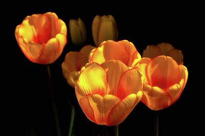 Photograph - Tulip Festival Participants by Craig Strand