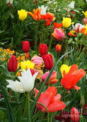 Photograph - Tulip Field 10 by Rudi Prott