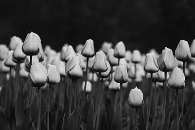 Photograph - Tulip Field Bw by Gregory Alan