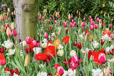 Photograph - Tulip Field In De Keukenhof by Compuinfoto