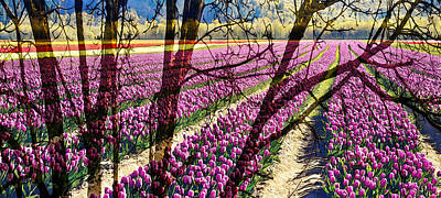 Agassiz Photograph - Tulip Field In The Valley by Marion McCristall