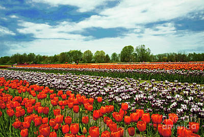 Queen Rights Managed Images - Tulip Field Landscape Beauty Royalty-Free Image by Regina Geoghan