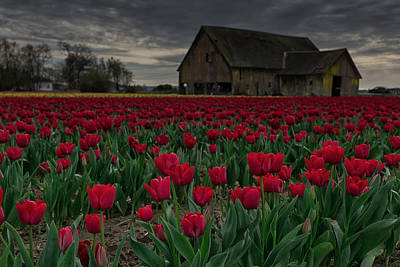 Canon 6d Photograph - Tulip Field by Thomas Hall
