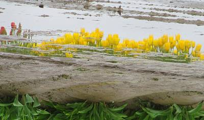 Photograph - Tulip Flipped Reflection by Karen Molenaar Terrell