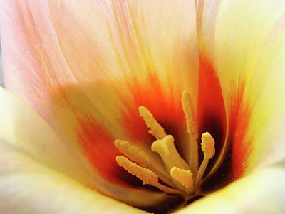 Vintage College Subway Signs Color - TULIP FLOWER ARTWORK 31  Tulips Flowers Macro Spring Floral Art Prints by Baslee Troutman