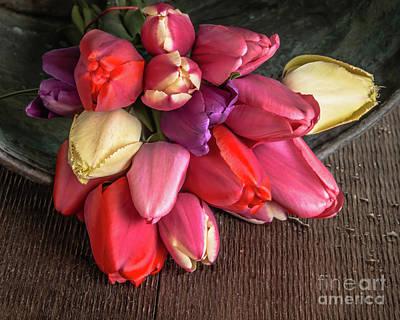 Photograph - Tulip Flowers Glow by Edward Fielding
