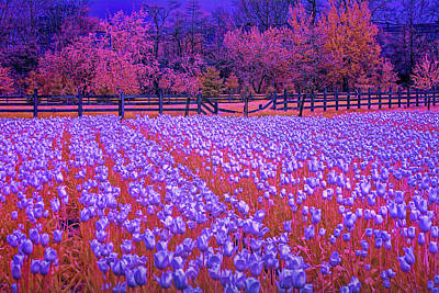 Photograph - Tulip Flowers In Infrared by Randall Nyhof