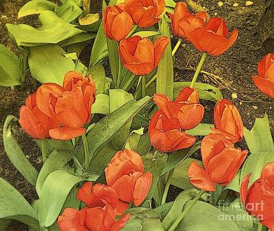 Photograph - Tulip Frenzy by Miriam Danar