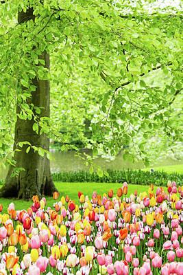 Photograph - Tulip Garden - Amsterdam by Melanie Alexandra Price