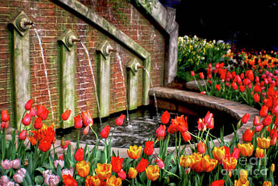 Photograph - Tulip Garden At Water Fountain by Sandy Moulder