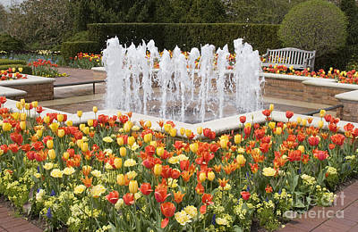 Tulip Garden Original by Elvira Butler