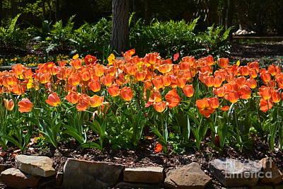 Photograph - Tulip Garden Glow by Maria Urso