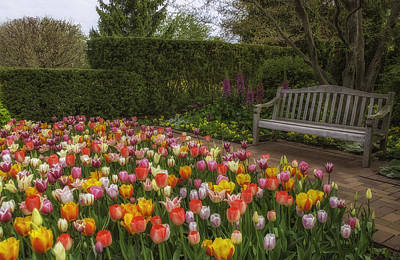 Photograph - Tulip Garden by Julie Palencia