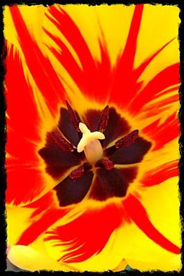 Photograph - Tulip by Gini Moore