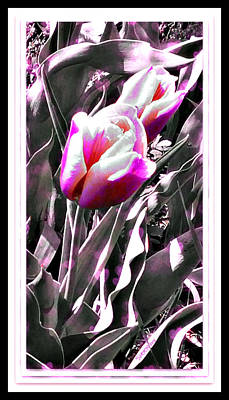 Digital Art - Tulip In Magenta by Christine Nichols
