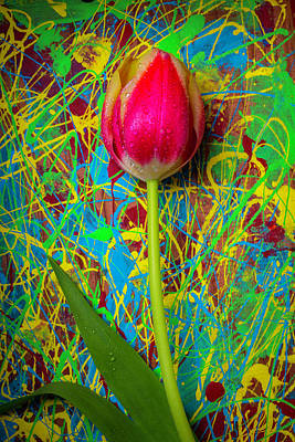Tulip In Painted Box Art Print by Garry Gay
