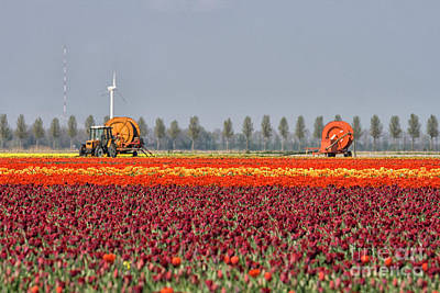 Photograph - Tulip Industry by Patricia Hofmeester
