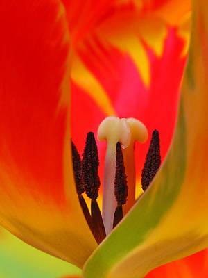 Tulip Intimate Art Print