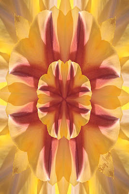 Photograph - Tulip Kaleidoscope by Kristy Jeppson