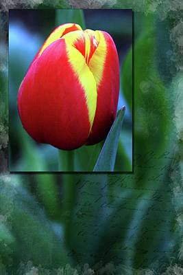 Canon 6d Digital Art - Tulip by Keith Hawley