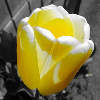 Flower Digital Art - Tulip by Kumiko Izumi