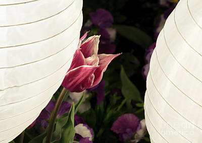 Photograph - Tulip Lantern by Angela DeFrias