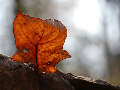 Photograph - Tulip Leaf  by Jane Ford