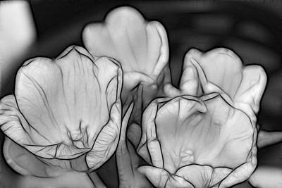 Photograph - Tulip Line Study by Kevin  Sherf