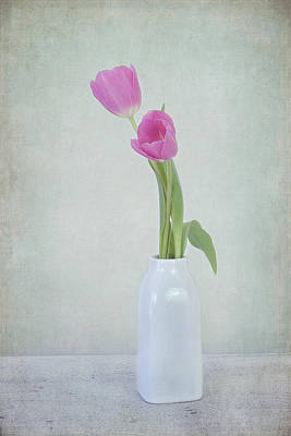 Charming Cottage Photograph - Tulip Love by Kim Hojnacki