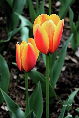 Spring Bulbs Digital Art - Tulip Magic Iv by Suzanne Gaff