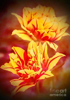 Photograph - Tulip Mania by Elizabeth Winter
