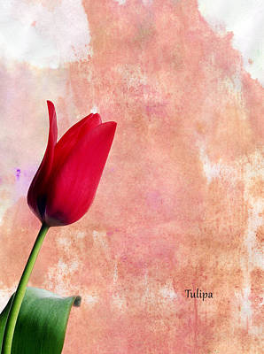 Tulip Art Print by Mark Rogan
