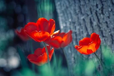Digital Art - Tulip by Maye Loeser