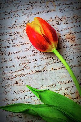 Tulip On Old Letter Art Print