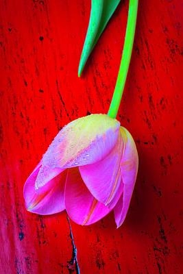 Tulip On Red Table Art Print