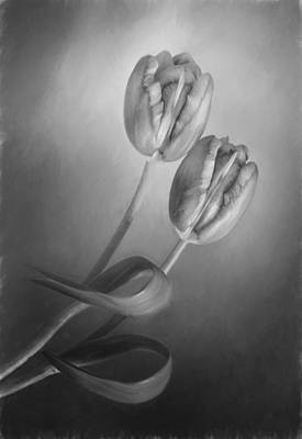 Photograph - Tulip Pair In Monochrome by David and Carol Kelly