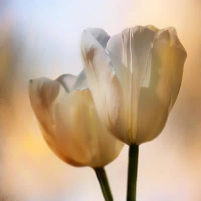 Photograph - Tulip Pair by Nikolyn McDonald