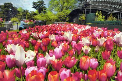 Photograph - Tulip Parade by Jessica Jenney