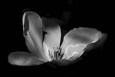Photograph - Tulip Petals - 365-24 by Inge Riis McDonald