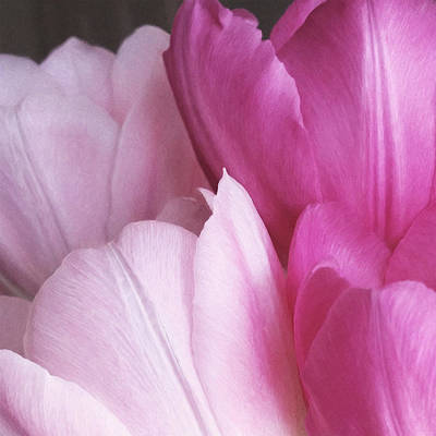 Digital Art - Tulip Petals by Julian Perry