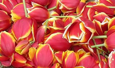 Photograph - Tulip Petals by Karen Molenaar Terrell