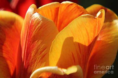 Photograph - Tulip Petals by Lori Mellen-Pagliaro