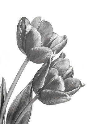 Photograph - Tulip Sketch by David and Carol Kelly