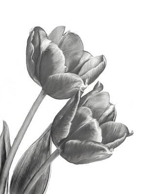 Photograph - Tulip Sketch by David and Carol Kelly