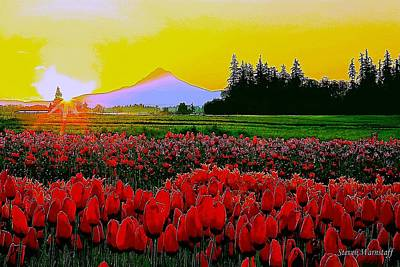 Photograph - Tulip Sunrise by Steve Warnstaff