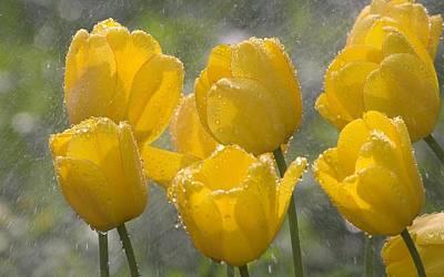 Digital Art - Tulip by Super Lovely