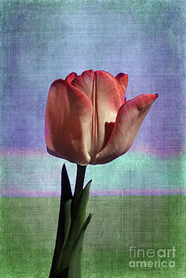 Photograph - Tulip Surreal by Nina Silver