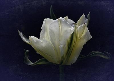 Art Print featuring the photograph Tulip Tears by Richard Cummings