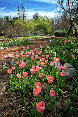 Photograph - Tulip Time In The Garden by Lynn Bauer
