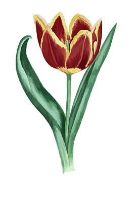 Digital Art - Tulip by Tom Prendergast